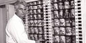 Удивительная история супермаркета, которая изменила мир 5