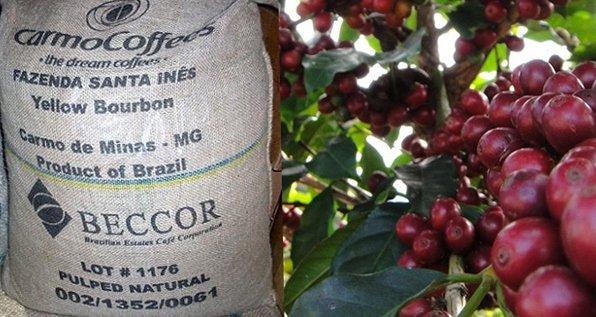 Самый дорогой кофе. Fazenda Santa Ines