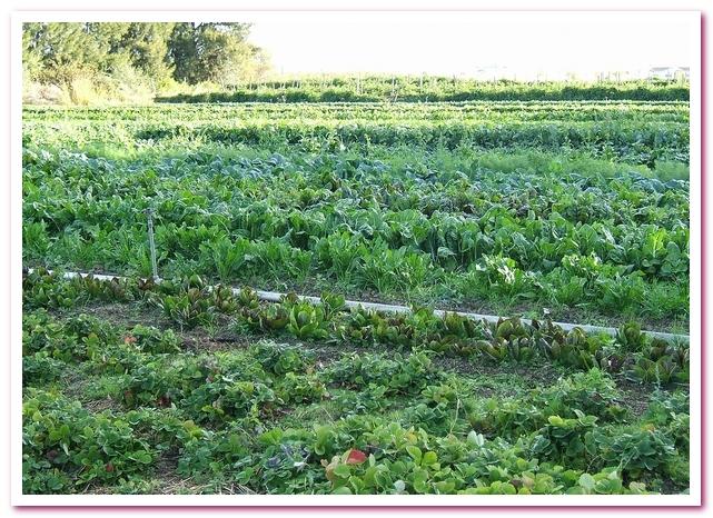 Органические продукты. Органическая ферма