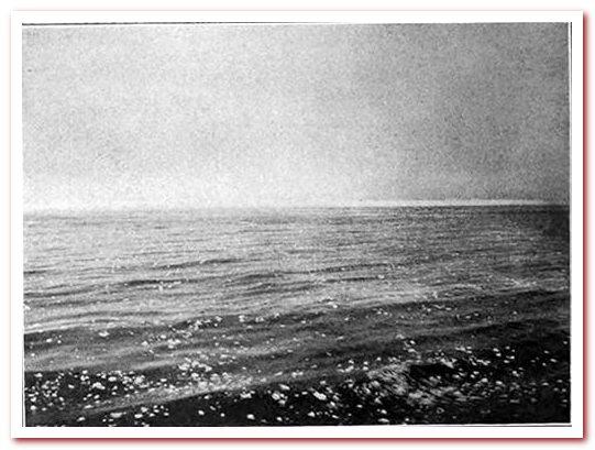 Вид с парохода Карпатия на ледяное поле у места катастрофы, рано утром 15 апреля 1912 г.