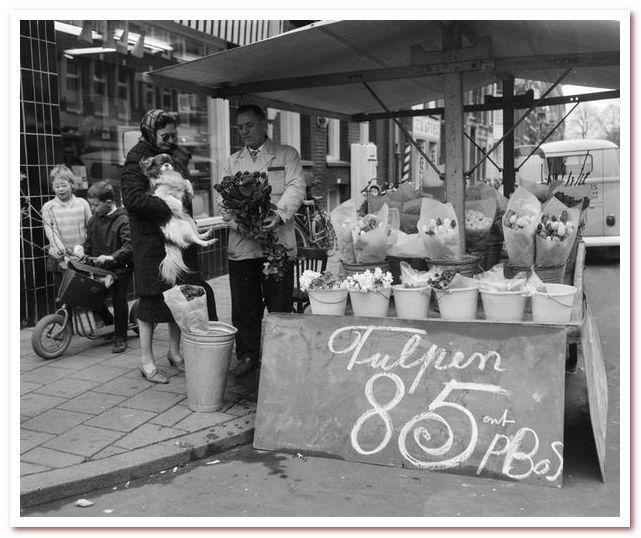 Голландские тюльпаны в цветочных киосках Амстердама, 1963 г.