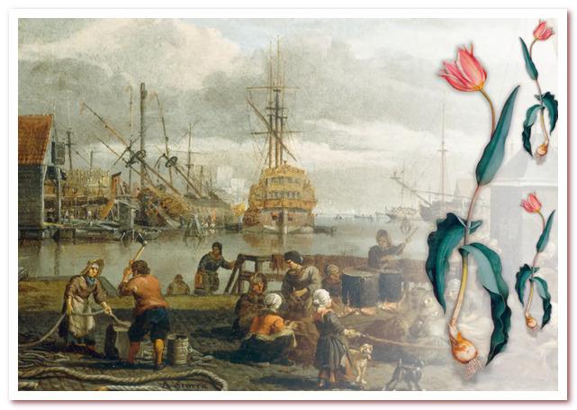 Голландские тюльпаны. Суда, перевозящие грузы со всего мира, заходили в порт Амстердама. С конца 16 века луковицы тюльпанов привозили из Константинополя.