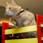 Ловкость кошек: Cat Agility. 6 аспектов