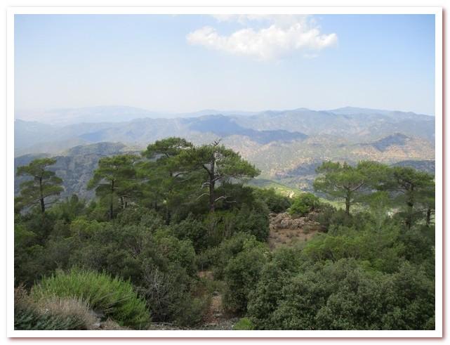 Курорты Кипра. Кипрский кедр - растение-эндемик